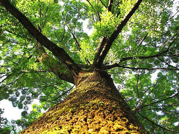 cristian-bortes-tree.jpg