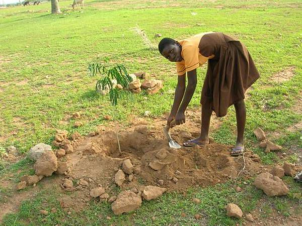 Sandra-the-vice-president-of-the-Dulugu-JHS-Green-Club-planting-a-seedling-June-2011.jpg