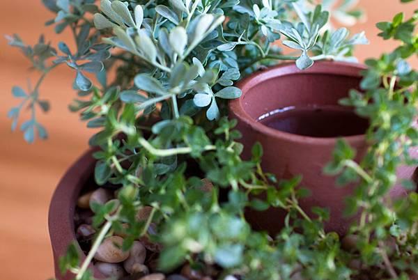 planter_closeup