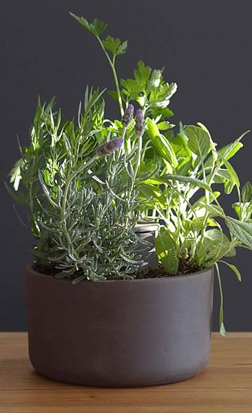planter_left