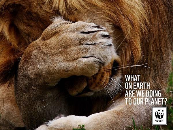 WWF-Denmark-Lion
