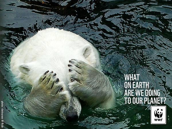 WWF-Denmark-Polar-Bear