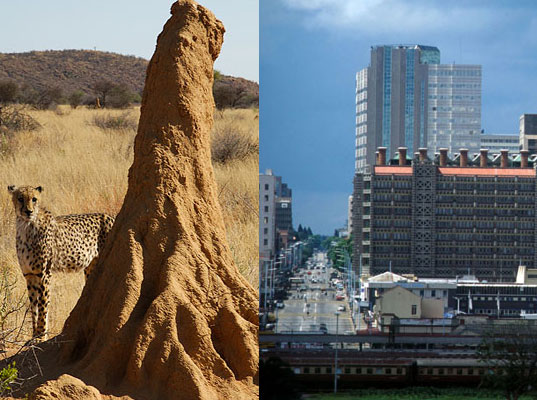 termitehararezimbabwe.jpg