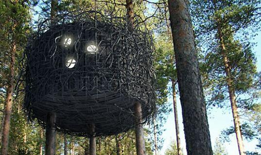 birds_nest_01.jpg