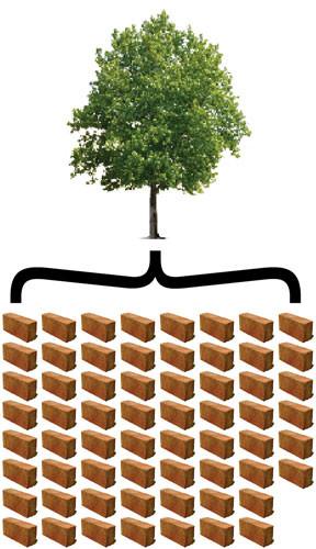 brickvstree.jpg
