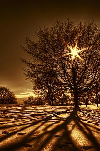 tree-shadow.jpg