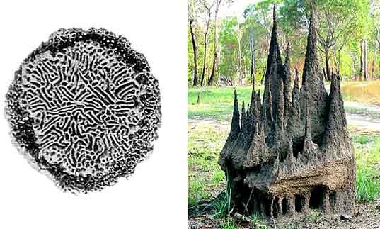 termite_model.jpg