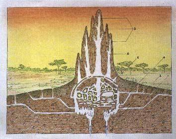 termite1.jpg