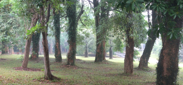 20101113 7 在地設計與低汙染裝置藝術 10 纏繞樹的藤蔓.jpg
