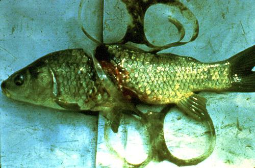 fish6pack_500x330.jpg