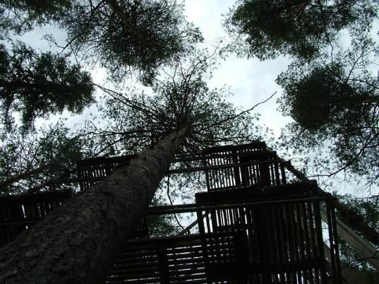 Swedish-Tree-Hotel-Under-Construction-1.jpg