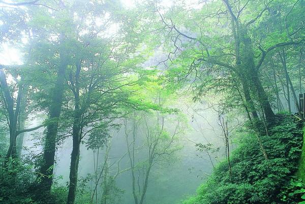 01屬於熱帶高山闊葉霧林的藤枝森林遊樂區-邱慶耀攝.jpg