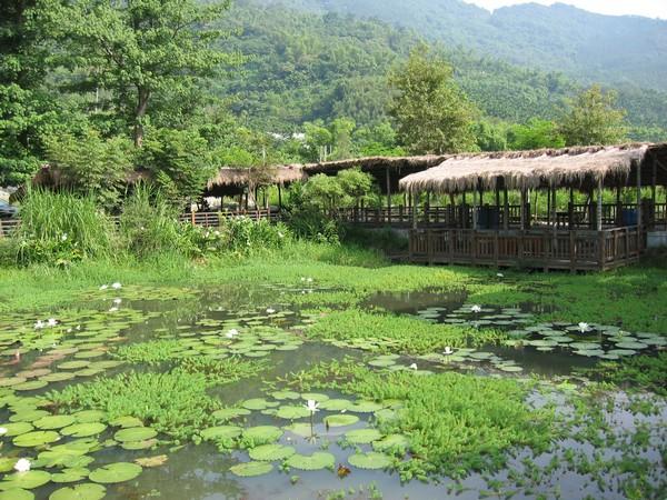 07馬太鞍溼地-生態旅遊協會提供.JPG