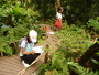 99/7/20 在植物園裡面進行植物觀察