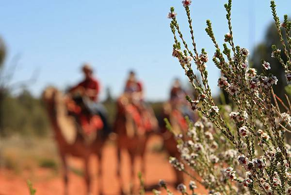 Uluru Photography 009