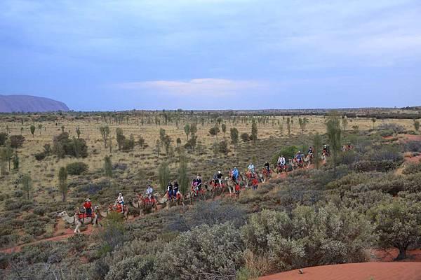 Uluru Camel Tour 121-1024