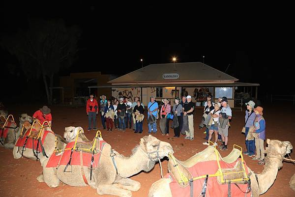 Uluru Camel Tour 003