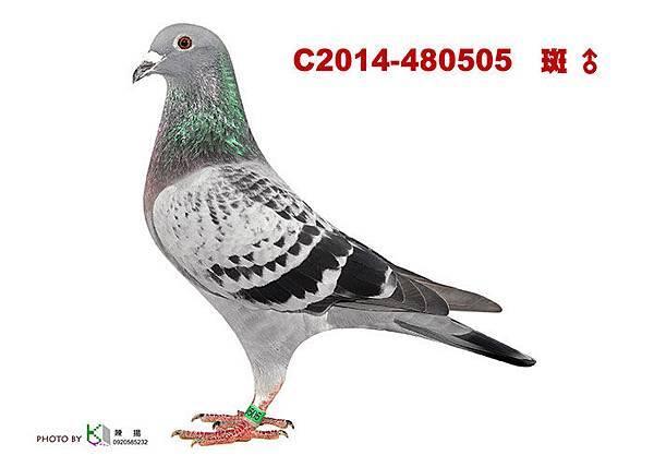 C2014-480505 .jpg