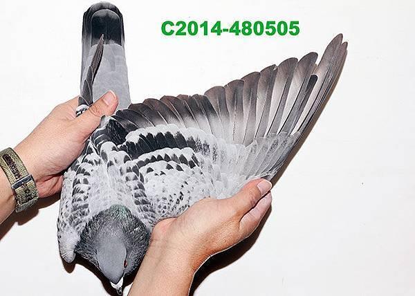 C2014-480505翅