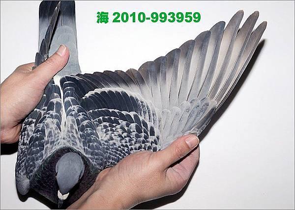 10-10-993959 翅