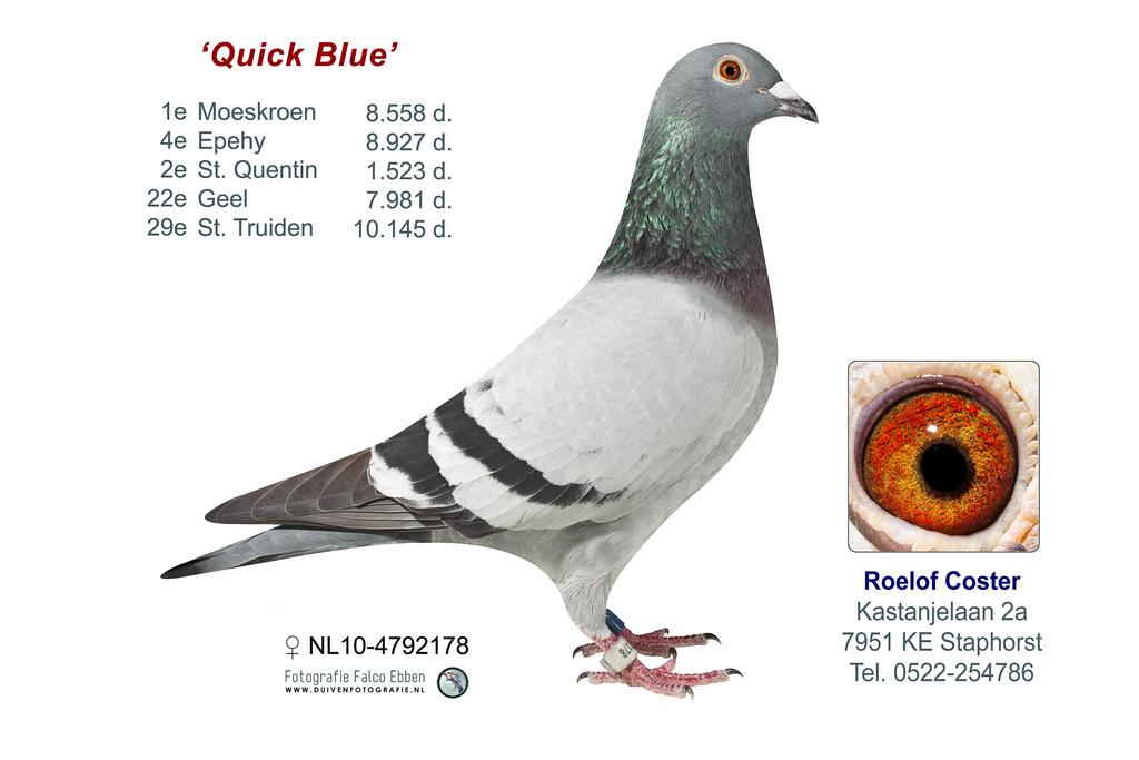 NL10-4792178