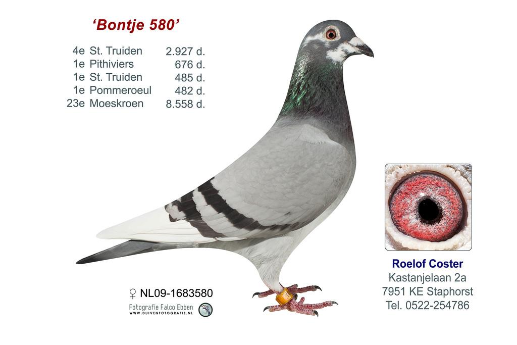 NL09-1683580