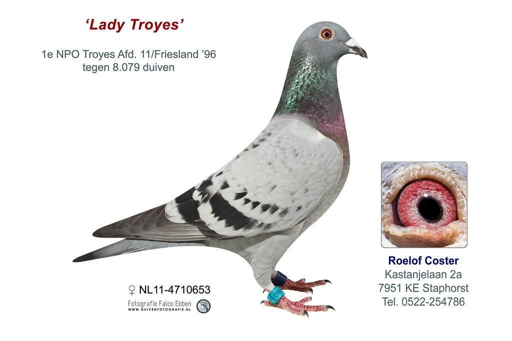 NL11-4710653