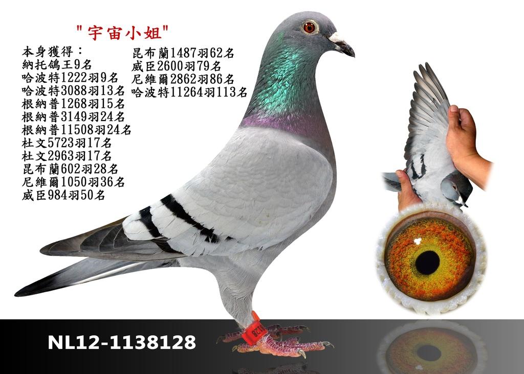 1-NL12-1138128