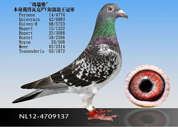6-NL12-4709137
