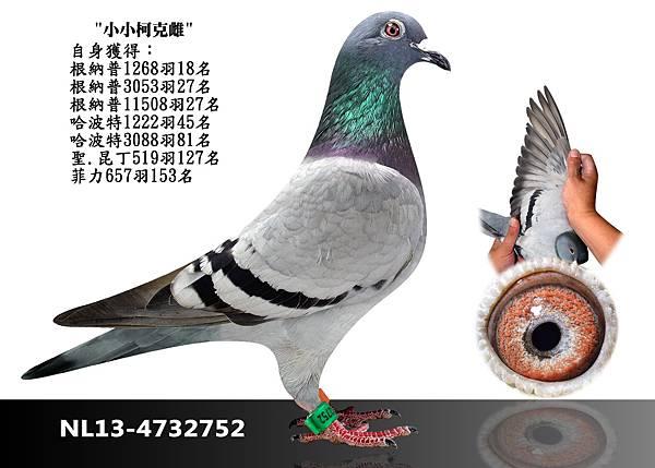 8-NL13-4732752