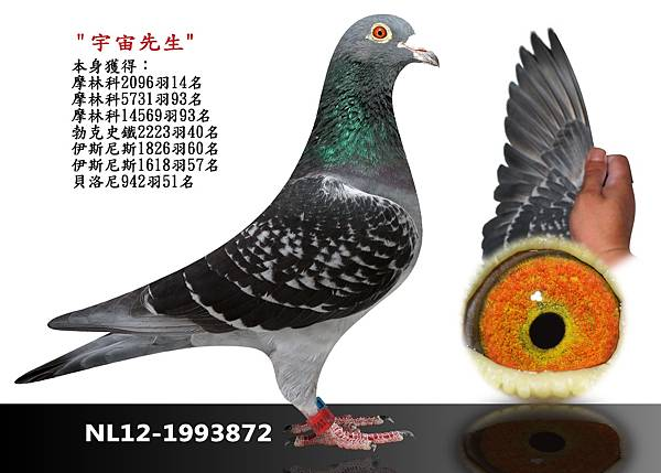 19-NL12-1993872