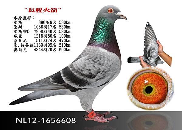 10-NL12-1656608