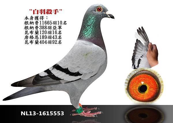 13-NL13-1615553