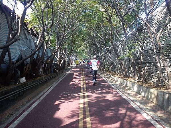 東豐自行車道兩旁樹蔭林立