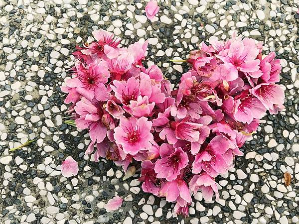 陪伴是灌溉愛之花的養分
