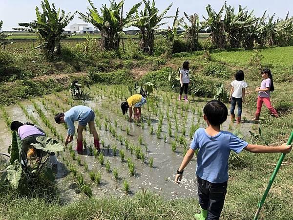 圖說:農耕實習課