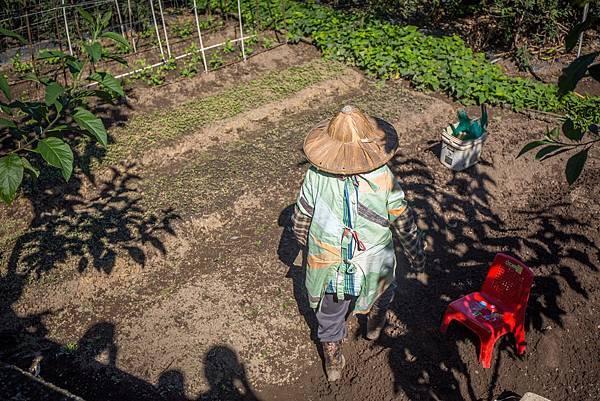 (圖說:奶奶白天勤於農事,打點她一天的生活。)