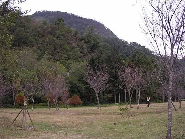 遊客中心旁草地, 樹好像是新種的