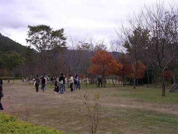 遊客中心旁草地, 有紅色的不知樹種一棵