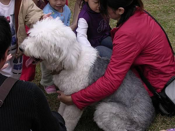 可愛大狗被愛熱鬧鄉民圍繞