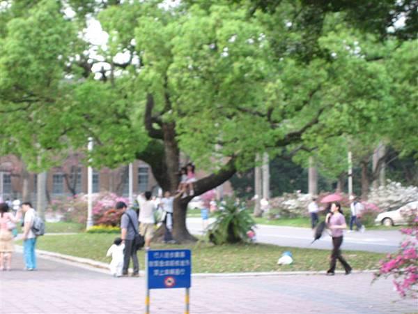 坐在樹上小女生