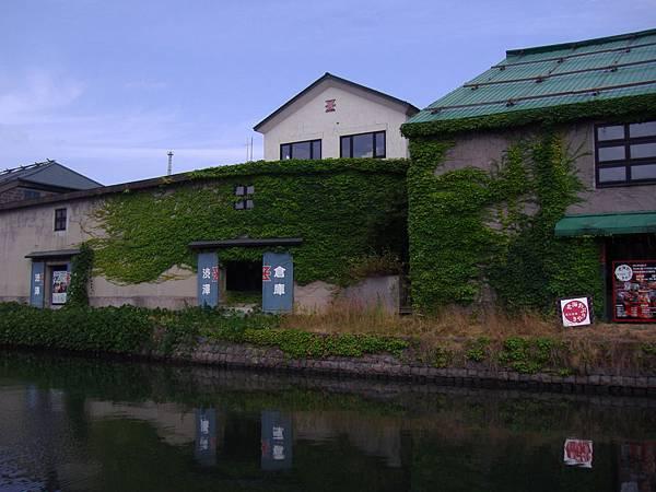 319 舊運河旁的舊倉庫, 爬滿了一片綠.JPG