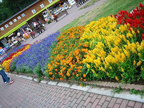 365 名水吹出公園裡一樣有花.JPG