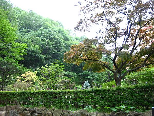 402 第一瀧本館的庭院 2.JPG