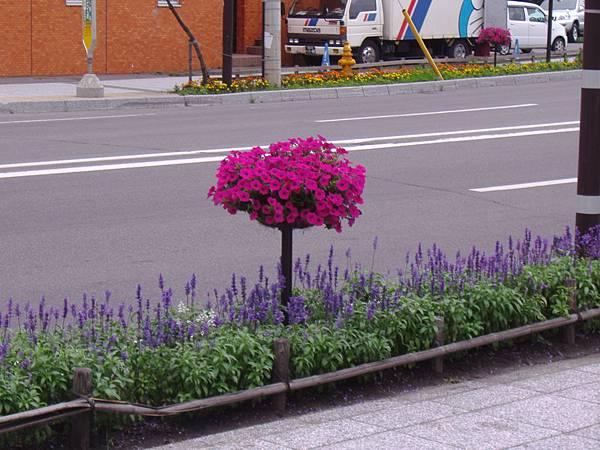 503 路邊莫名其妙的花.JPG