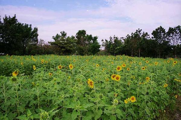 景觀綠肥區.jpg