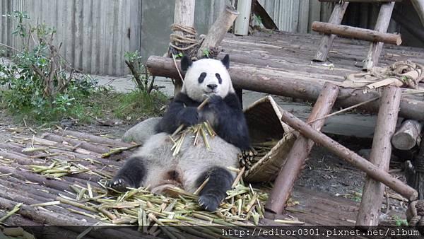 熊貓ㄚ頭1.JPG
