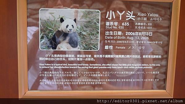熊貓丫頭2.JPG