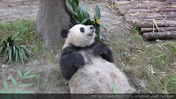 熊貓ㄚ頭3.JPG