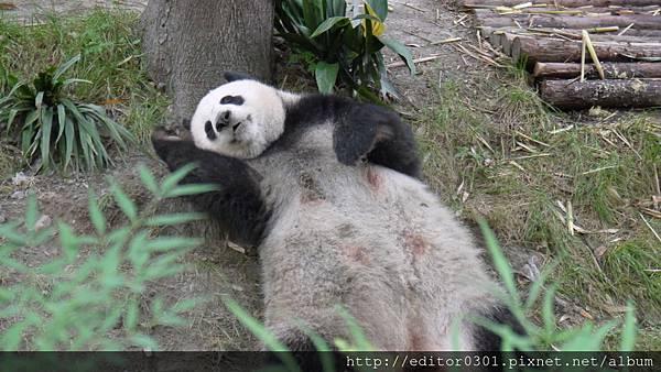 熊貓ㄚ頭4.JPG